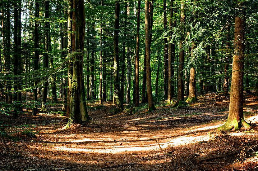 Iedomājies Tu pamosties kaut... Autors: Ciema Sensejs Kā vienatnē izdzīvot mežā, bez telefona, elektrības un veikala paikas.