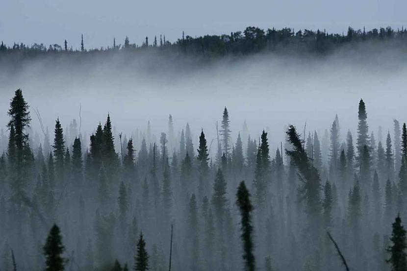 Lai izdzīvotu mežā Tev... Autors: Ciema Sensejs Kā vienatnē izdzīvot mežā, bez telefona, elektrības un veikala paikas.
