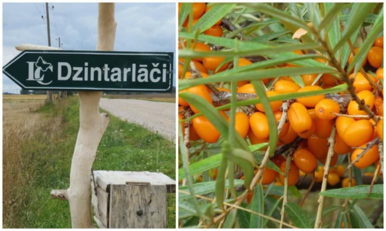 Zemniekunbspsaimniecībanbspquo... Autors: 100 A 19 Latvijas dārzi, kuri aicina pašiem lasīt ogas. Izdevīgi!