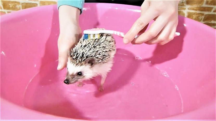 Autors: cocosik@ru Vismīļākais video ar dzīvniekiem septembrī