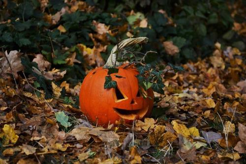 Autors: Fosilija Autumn #4
