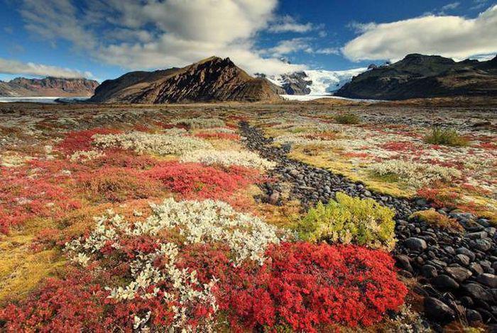 Autors: Fosilija Maz pazīstamā Islande.