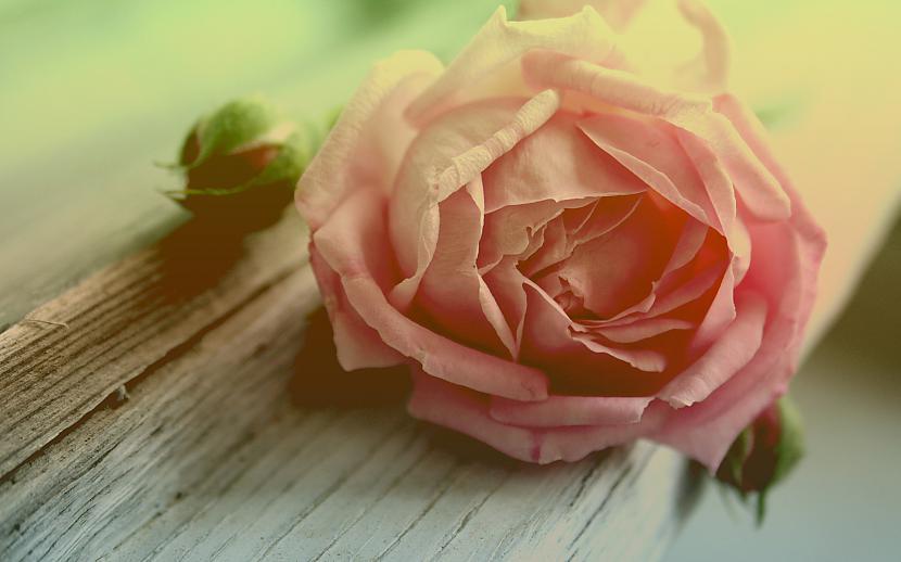 Autors: mazais28 Ziedi 8