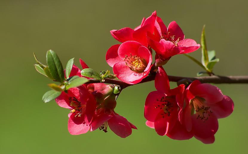 Autors: mazais28 Ziedi 13