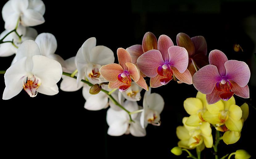 Autors: mazais28 Ziedi 17