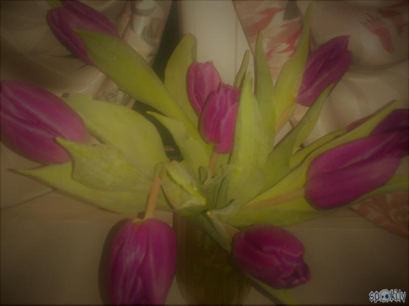 Tulpju nereālās krāsasRada... Autors: ezkins Noskaņu apkampienos