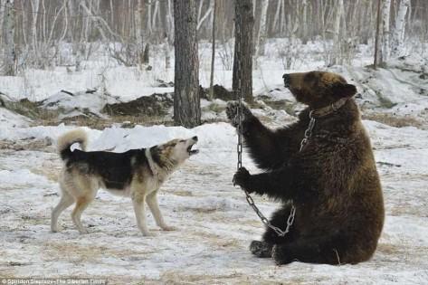 Autors: Fosilija Balonu spridzināšana krievu stilā!!!