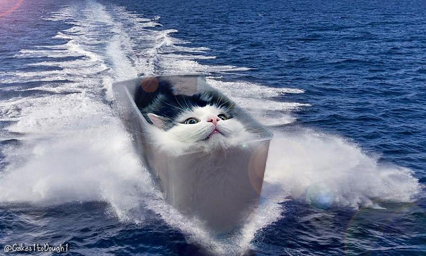 Autors: Latvian Revenger Kas notiek, ja kaķu tante tiek pie Fotošopa?
