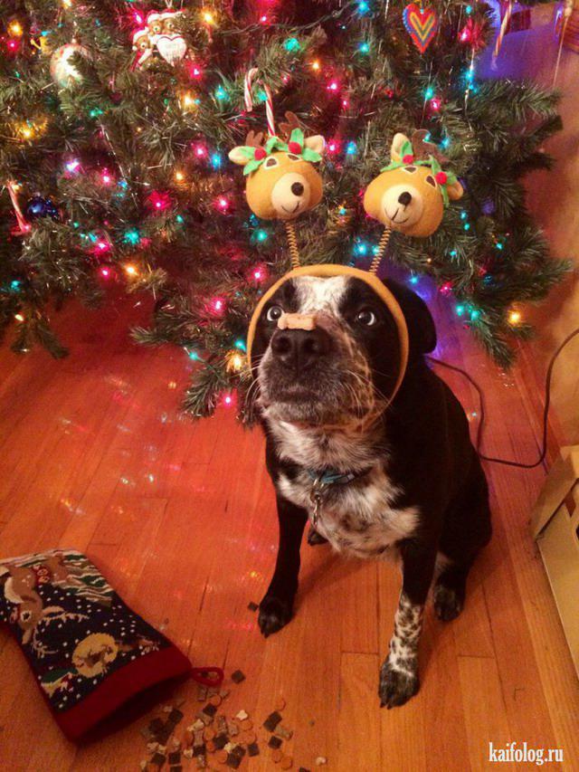 Autors: Pīters Kvils Smieklīgas Ziemassvētku un Jaunā Gada bildītes #4