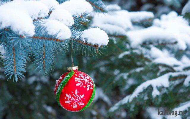 Autors: Pīters Kvils Smieklīgas Ziemassvētku un Jaunā Gada bildītes #8