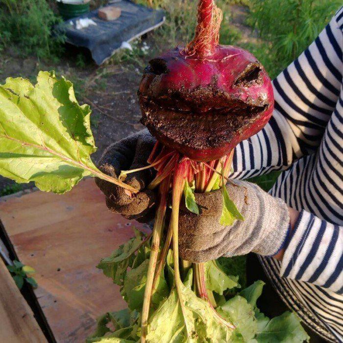 Autors: Fosilija 20 pierādījumi tam, ka dārzeņi ir attīstījušies un ir gatavi saziņai
