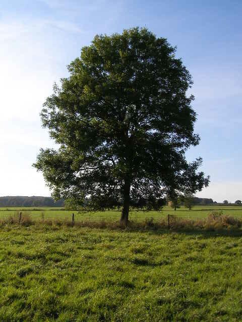 Latvija ir viena no zaļākajām... Autors: Buck112 100 interesanti fakti par Latviju