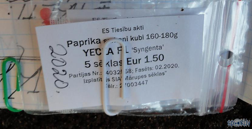 Paprikas sēlkas no Mārupes... Autors: Werkis2 Werkis d(' _ ')b atkal sēj un audzē papriku, tomātus, salātus u.tjpr. (2020)