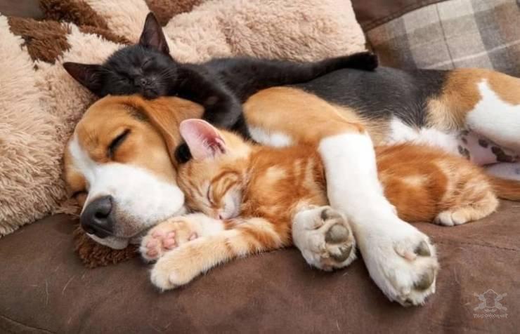 Autors: Fosilija Vai var pastāvēt draudzība starp suni un kaķi, skatāmies šīs bildes 🐱🐶