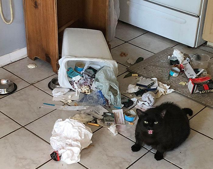 Mans kaķis ievēro piespiedu... Autors: Zibenzellis69 Vairāk nekā 10 kaķu fotogrāfijas, kas atšķiras ar sliktu izturēšanos