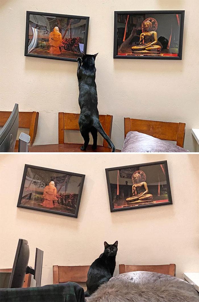 Pēc mana kaķa domām gleznām... Autors: Zibenzellis69 Vairāk nekā 10 kaķu fotogrāfijas, kas atšķiras ar sliktu izturēšanos
