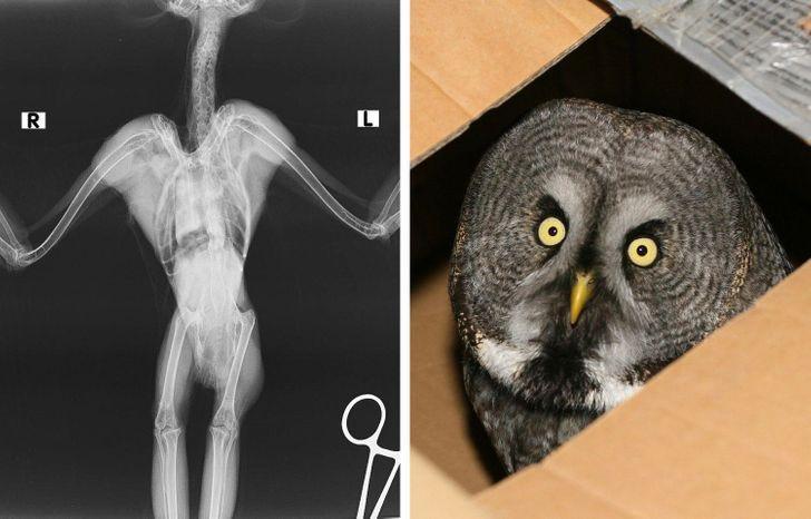 Pūces rentgenā izskatās galīgi... Autors: The Diāna 18 forši rentgeni redzesloka paplašināšanai