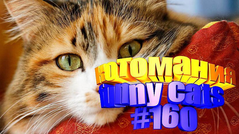Autors: kotomaniabest Smieklīgi kaķi | Jautrība ar kaķiem, katomanija #160 (video)