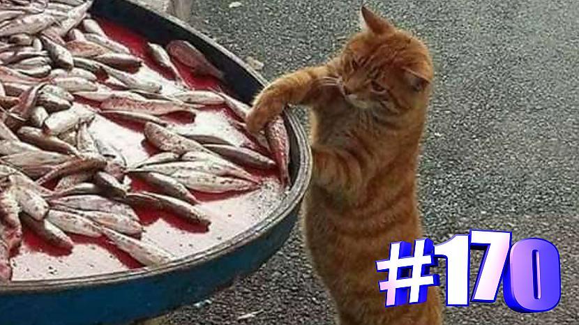 Autors: kotomaniabest Smieklīgi kaķi | Jautrība ar kaķiem, katomanija #170 (video)