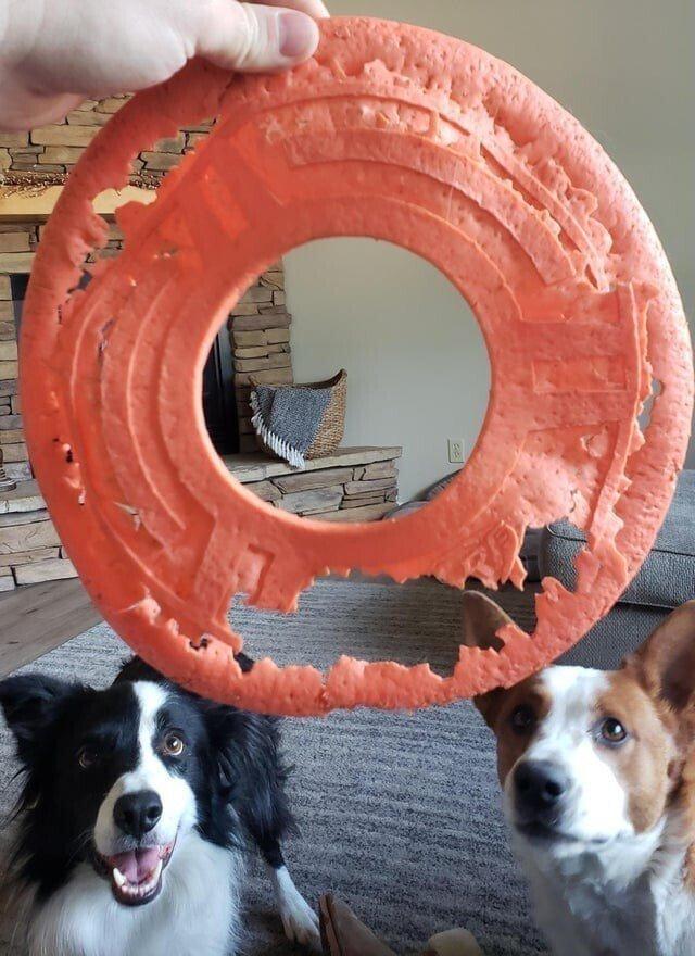 Mīļākā suņu rotaļlieta Autors: Zibenzellis69 19 kuriozi piemēri, kā laiks izmaina lietas