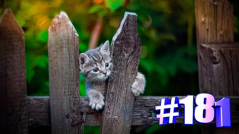 Autors: kotomaniabest Smieklīgi kaķi | Jautrība ar kaķiem, katomanija #181 (video)