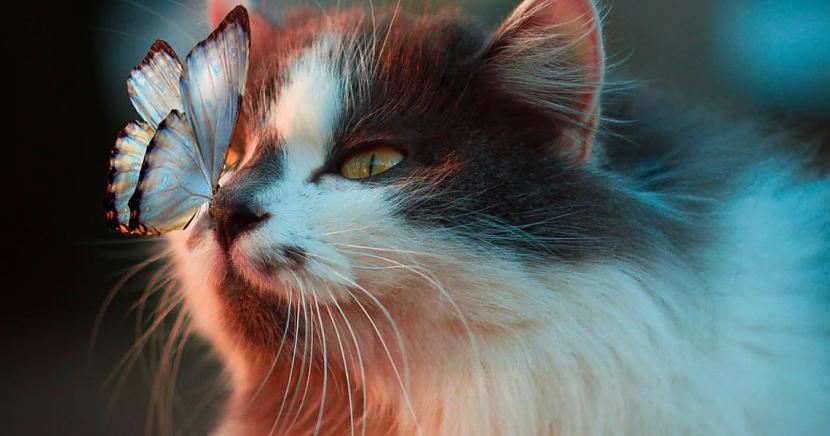 2 Kāpēc kaķa acis tumsā spīd... Autors: matilde Desmit ļoti interesanti fakti par kaķiem