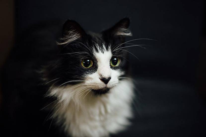 9 Līdzsvaru nodroscaronina... Autors: matilde Desmit ļoti interesanti fakti par kaķiem