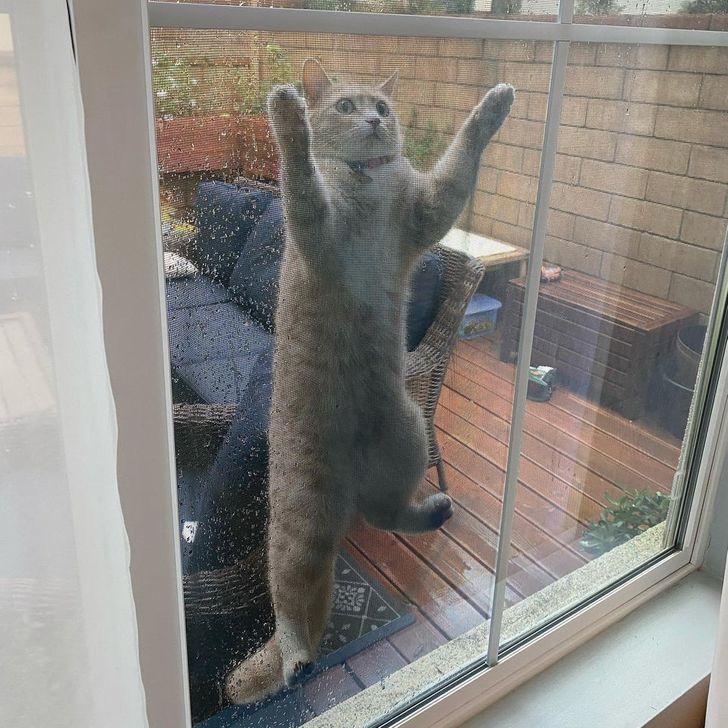 4 Nu jau dažas dienas mans... Autors: The Diāna 20 tvīti, kuri perfekti raksturo dzīvi kopā ar kaķi