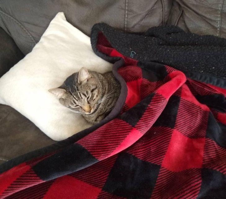 19 Vakar uzzināju ka mans... Autors: The Diāna 20 tvīti, kuri perfekti raksturo dzīvi kopā ar kaķi