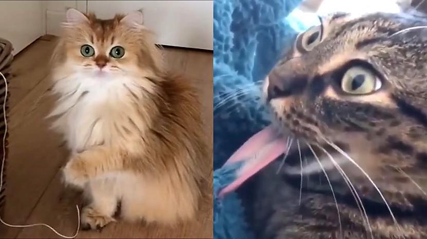 Autors: Yaroslav Chaban Smieklīgi kaķi ir visur