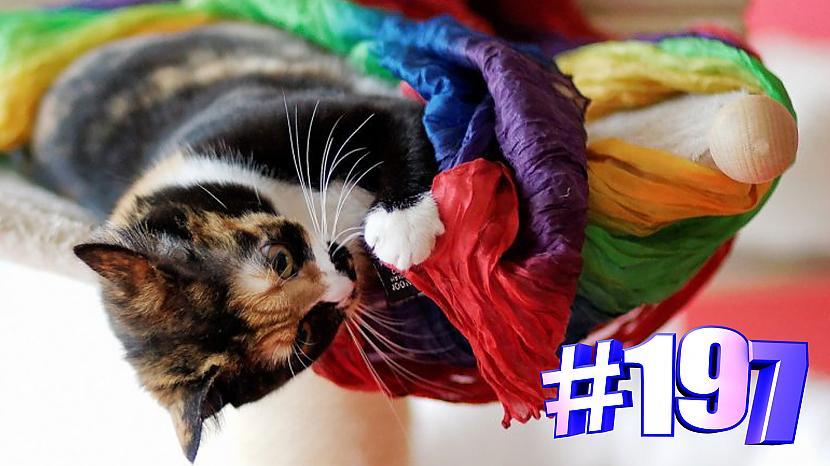Autors: kotomaniabest Smieklīgi kaķi | Jautrība ar kaķiem, katomanija #197 (video)