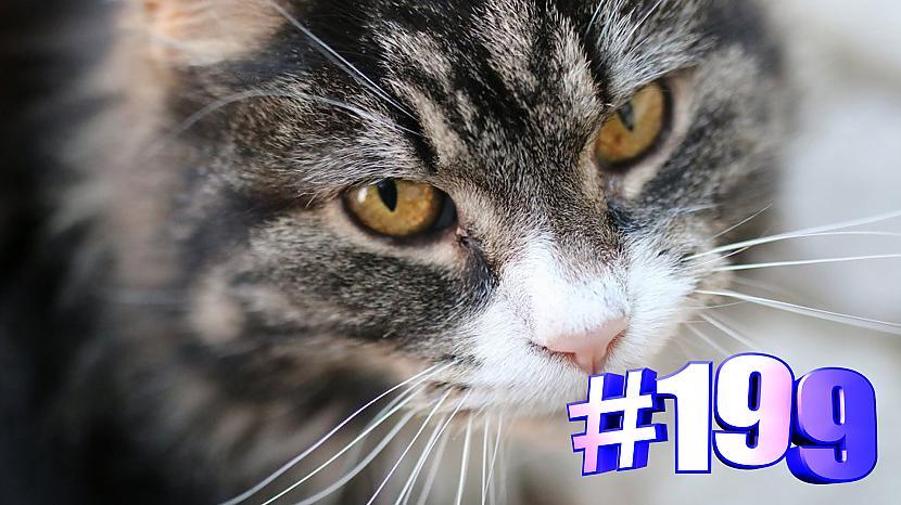 Autors: kotomaniabest Smieklīgi kaķi   Jautrība ar kaķiem, katomanija #199 (video)