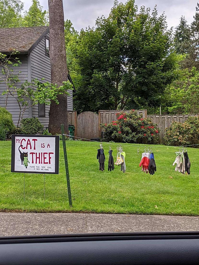 Nav īsti zināms kad Esme kļuva... Autors: matilde Ģimene uzzināja, ka viņu mājā dzīvo zagle, kura zog cimdus un maskas