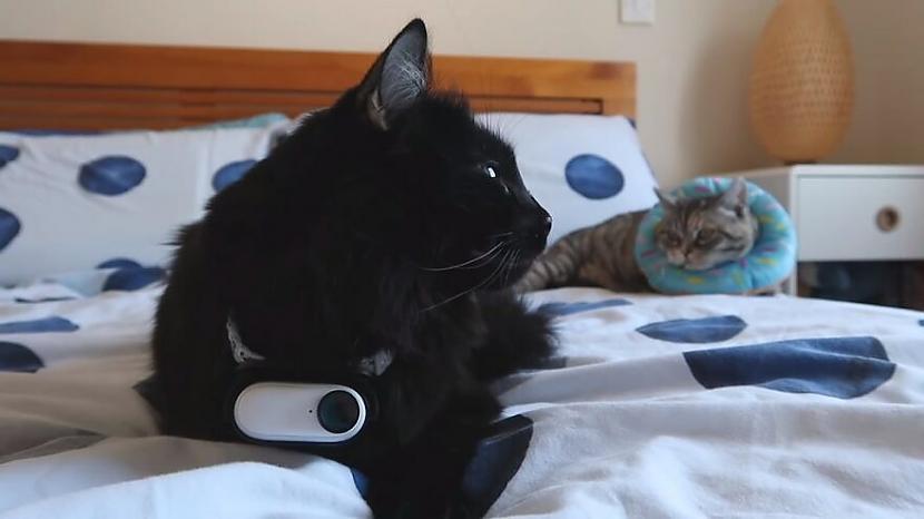 Pateicoties scaronai mazajai... Autors: matilde Ziņkārīgs saimnieks piestiprināja kameru savam kaķim, lai redzētu, ko viņš dara