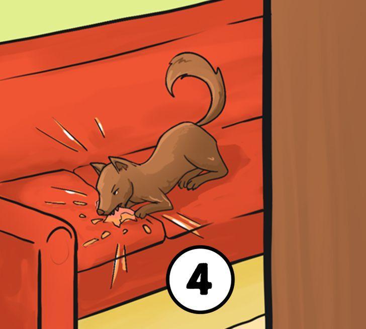 Padzīt suni no dīvānaJa izlēmi... Autors: Lestets Pirmais, ko darīt šajā situācijā? Izvēlies un uzzini, ko tas atklāj par tevi