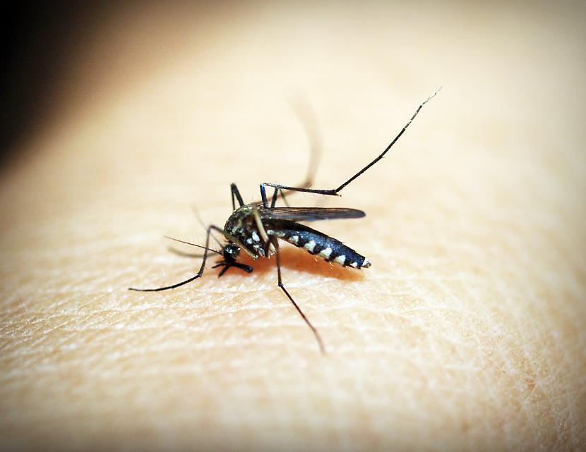 Latvijas Nacionālā Dabas... Autors: matilde Kāpēc šogad ir tik daudz odu?