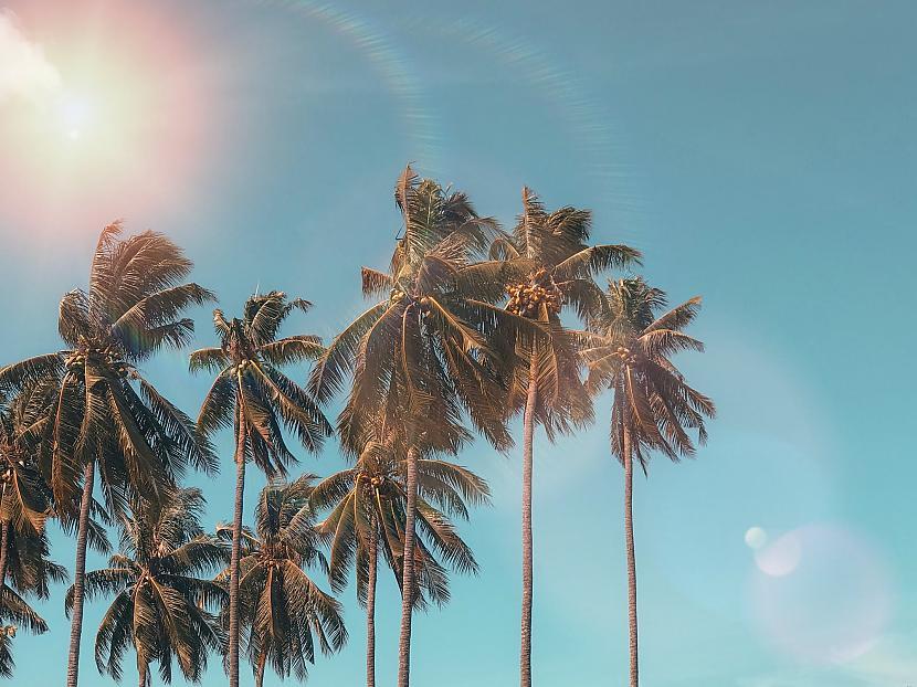 4 Īrijā palmas aug uz 53... Autors: The Diāna 18 ar ģeogrāfiju saistīti fakti, kuri tevi pārsteigs