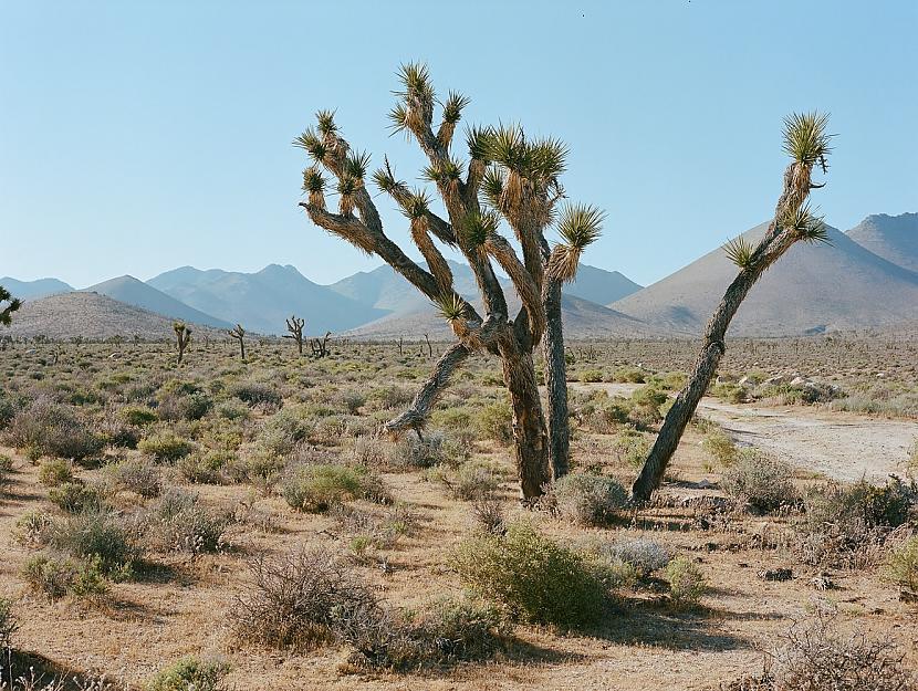 Nāves ieleja ir mājvieta... Autors: matilde Nāves ielejā gandrīz pārspēts pasaules augstākās gaisa temperatūras rekords