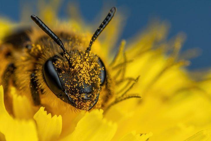 Bites tuvplānā neizskatās... Autors: Lestets 20 makrofotogrāfijas, kas ļaus paskatīties uz ikdienišķām lietām savādāk