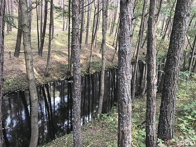 Meža upe kura katru reizi... Autors: ezkins Pasakainā jūra